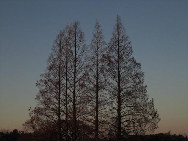 0001_冬枯れの木.JPG