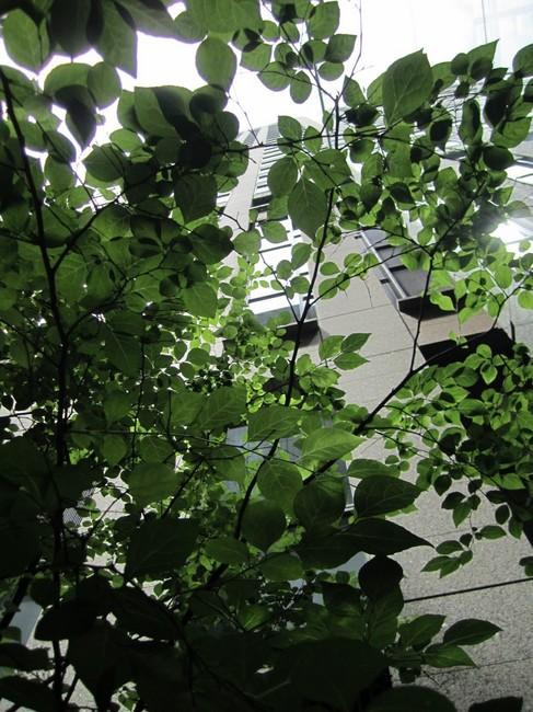 0001_東京駅の緑.JPG
