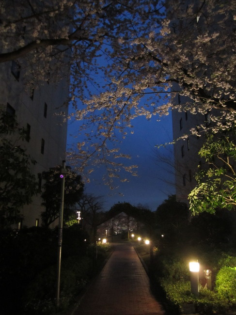 0001_東戸塚の桜.JPG