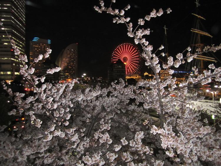 0001_MM夜桜.JPG