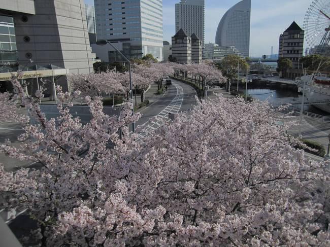 0002_4月11日桜木町.JPG