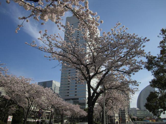 0002_4月11日桜木町_2.JPG