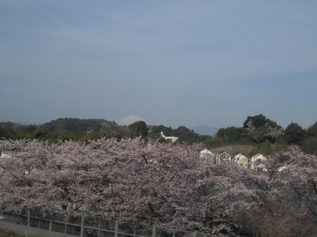 0002_新桜丘と富士.JPG