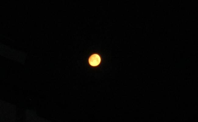 0312_西の空の月_Tr.JPG