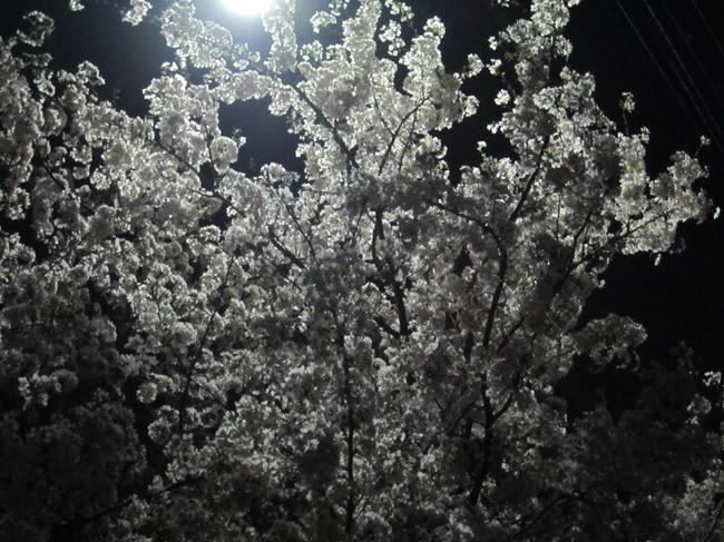 0335_新桜丘出発.JPG
