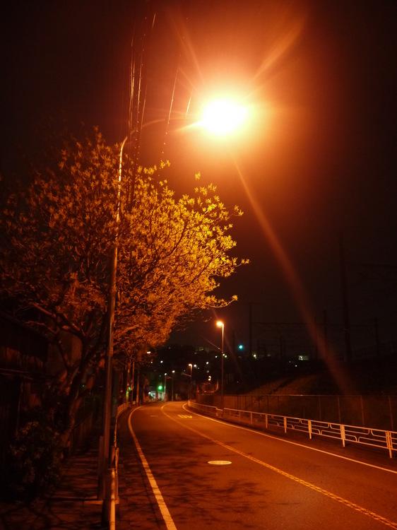 0413_真夜中の桜.JPG