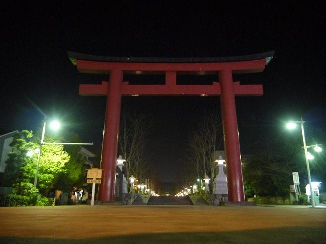0414_早朝の鎌倉八幡宮桜葛.JPG