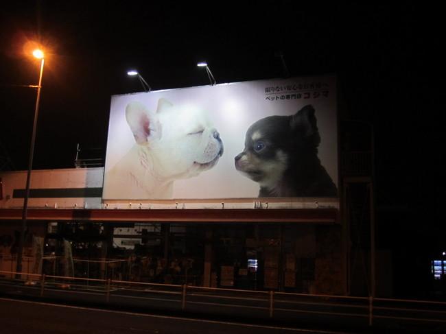 0418_国道16号犬の看板.JPG