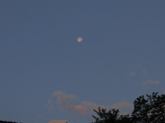 0514_沈むゆく月.JPG