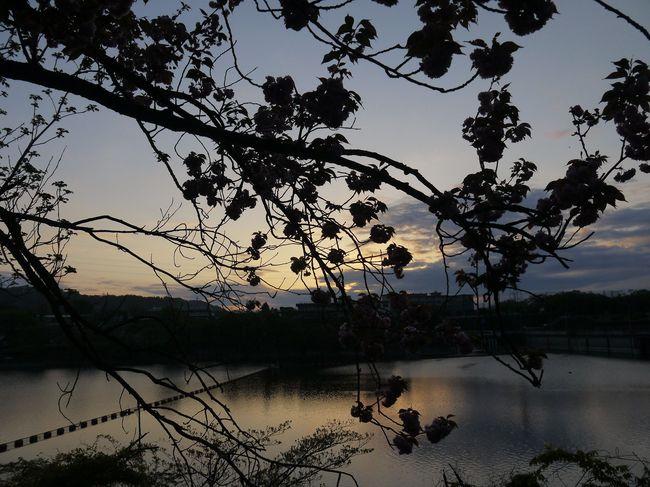 0518_津久井湖の朝焼け.JPG