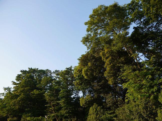 0527_青い空と新緑.JPG