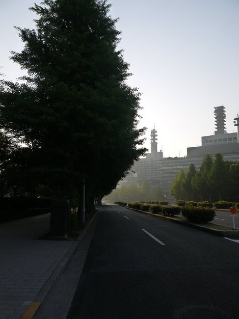 0533_静かな桜田通り.JPG
