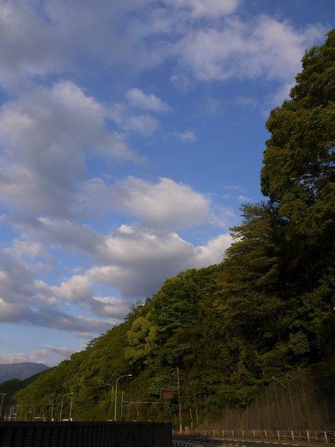0555_鮮やかな新緑.JPG