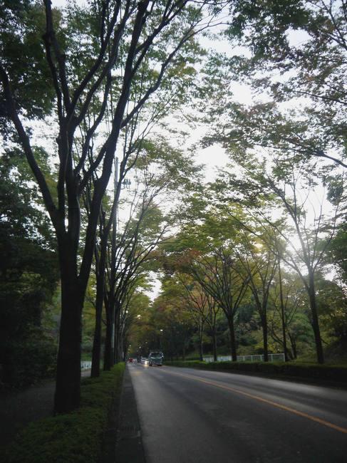 0609_美山街道の紅葉が始まる.JPG