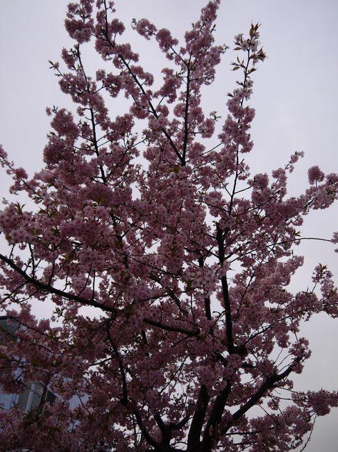0612_いつの間にか開花?.JPG