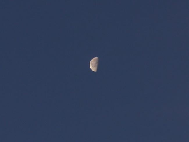 0632_西の空の半月.JPG