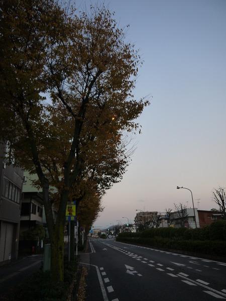 0635_平塚街路樹紅葉.JPG