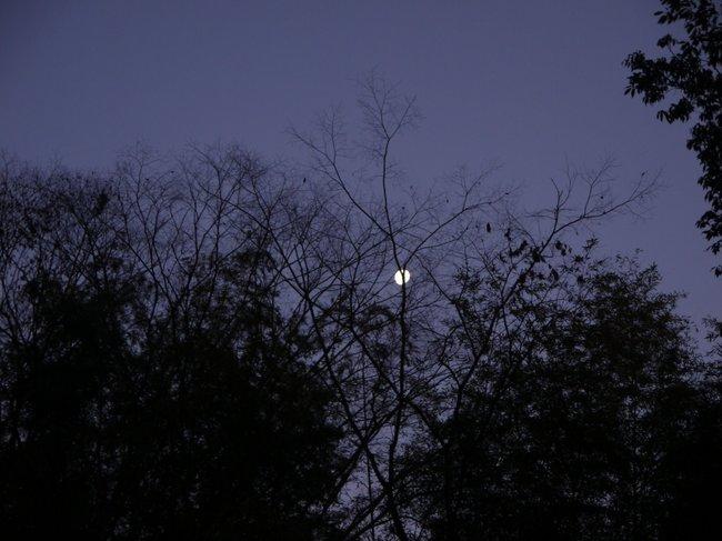 0636_梢に沈む月.JPG