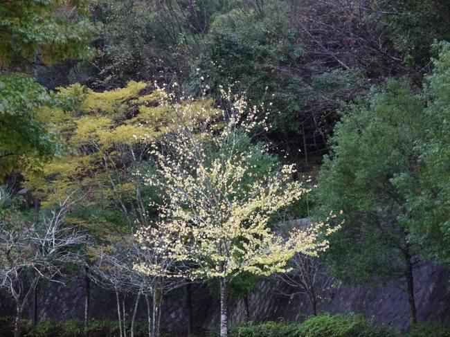 0637_夕焼けの里の紅葉.JPG