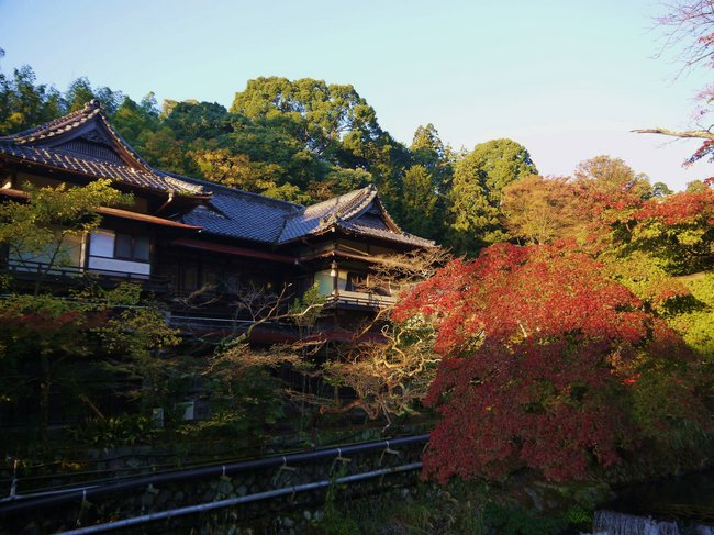 0652_湯河原温泉の紅葉.JPG