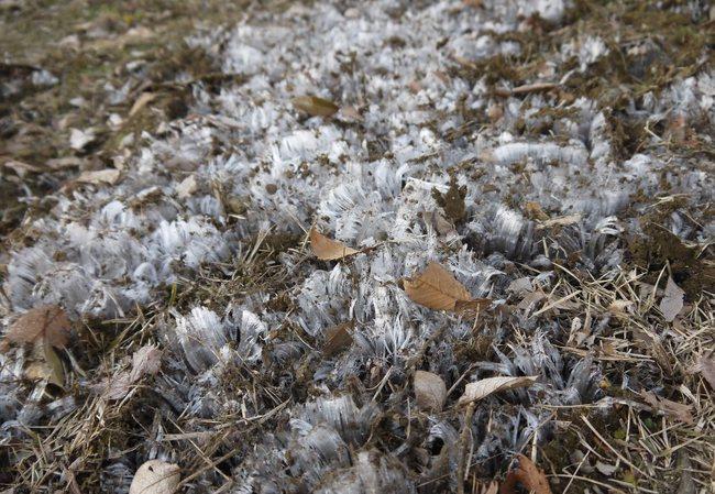 0654_寒さを助長する霜柱.JPG