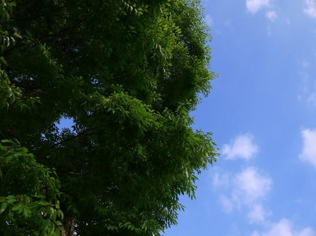 0701_イチデジの緑.JPG