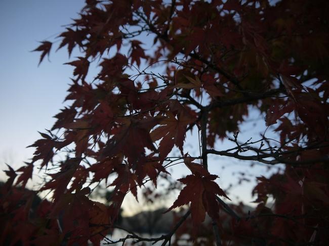 0707_宮ケ瀬湖の紅葉.JPG