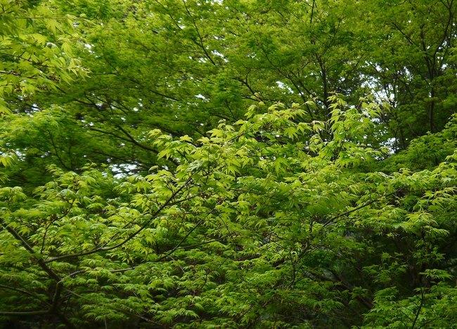 0722_深い緑.JPG