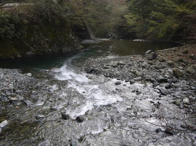 0724_熊倉川の深い緑.JPG