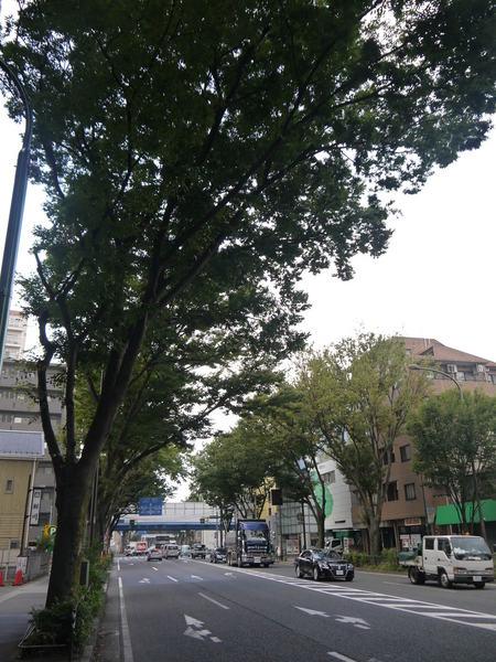 0731_空まで伸びる街路樹.JPG