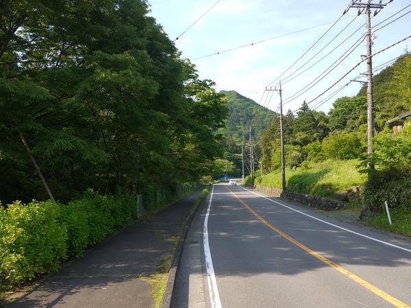 0737_新緑が深い宮が瀬への上り.JPG