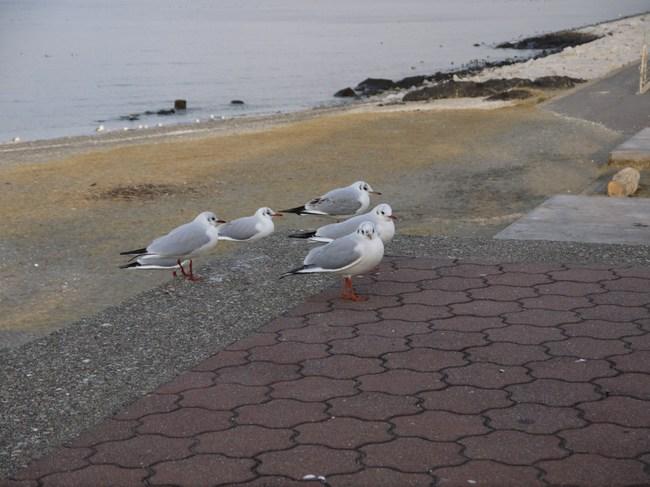 0737_検見川海岸に到着.JPG