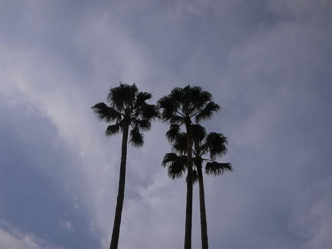 0747_熱海ヤシの木.JPG