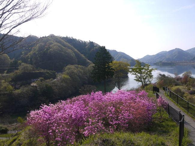 0757_ツツジと宮が瀬湖.JPG