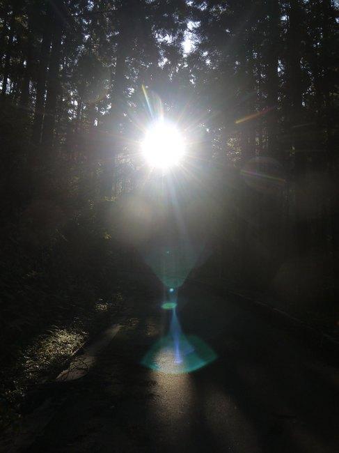 0757_樹幹の静かな登り.JPG