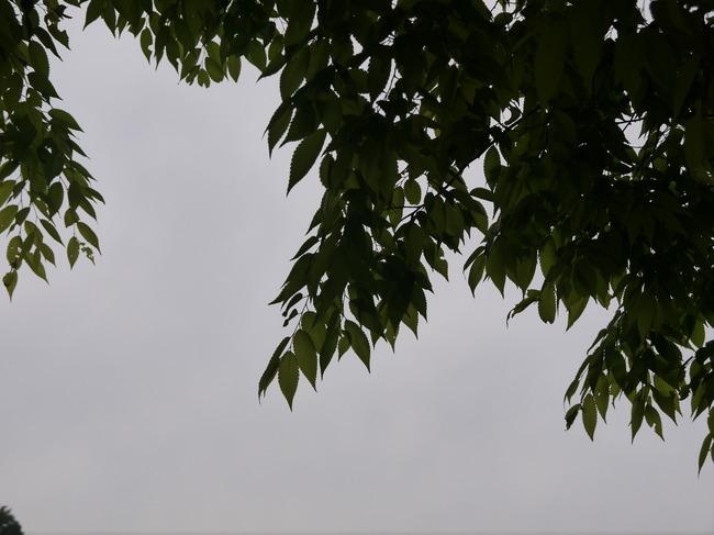 0758_宮が瀬の若葉.JPG