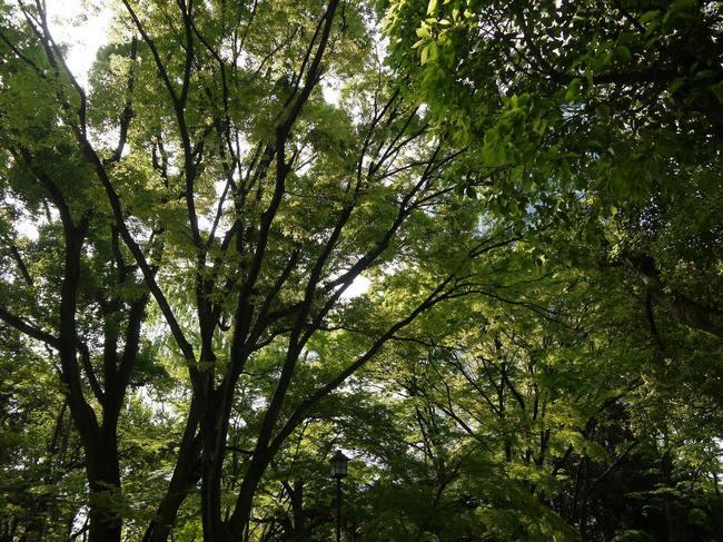 0758_芝公園の新緑.JPG