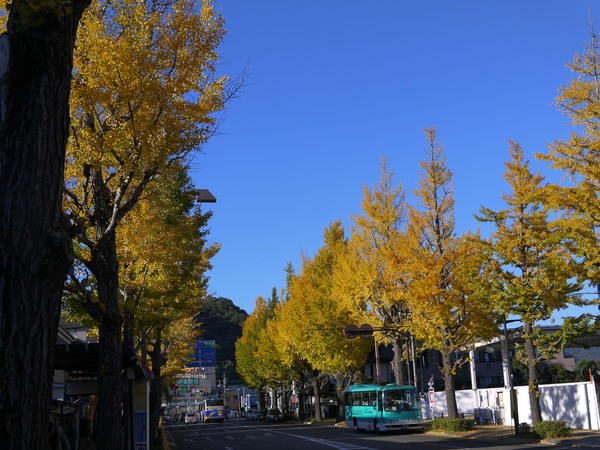 0800_高尾銀杏並木.JPG