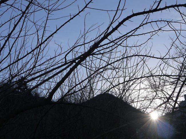 0801_朝日を浴びる.JPG