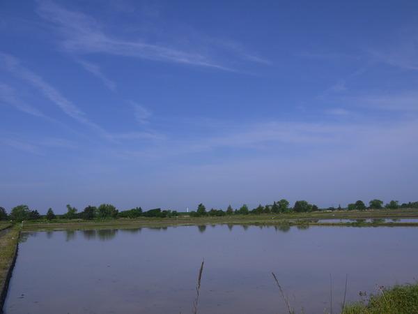 0801_青い空と水田.JPG