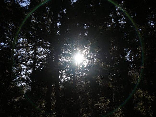 0811_木漏れ日が奇麗.JPG