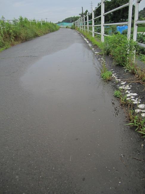 0815_境川降雨.JPG