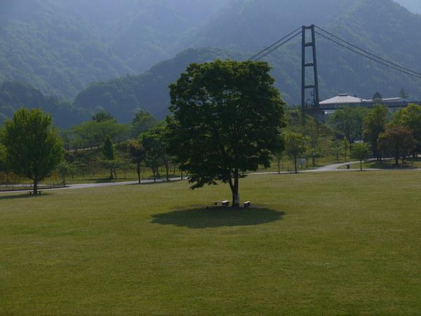 0818_宮が瀬の木.JPG