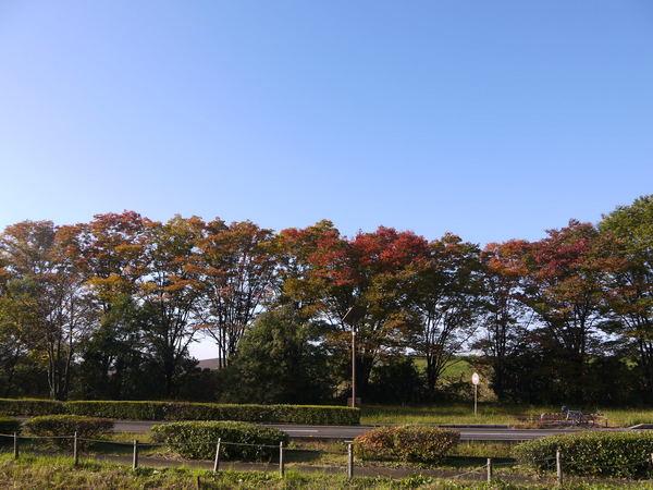 0823_紅葉と青空.JPG
