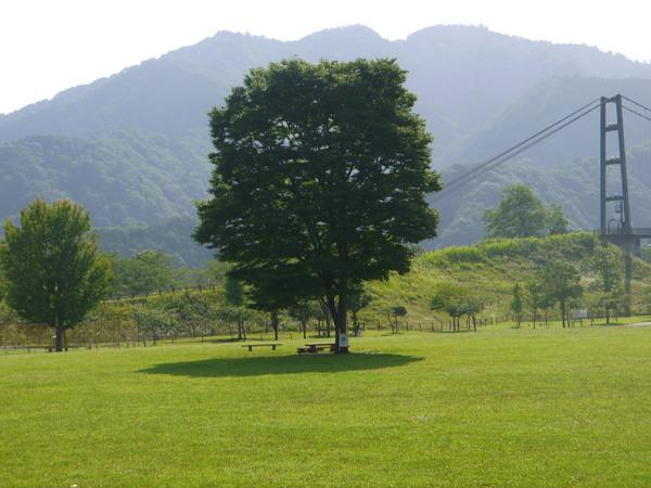 0824_宮が瀬の木.JPG