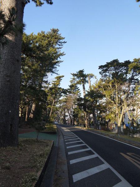 0824_東海道松並木.JPG