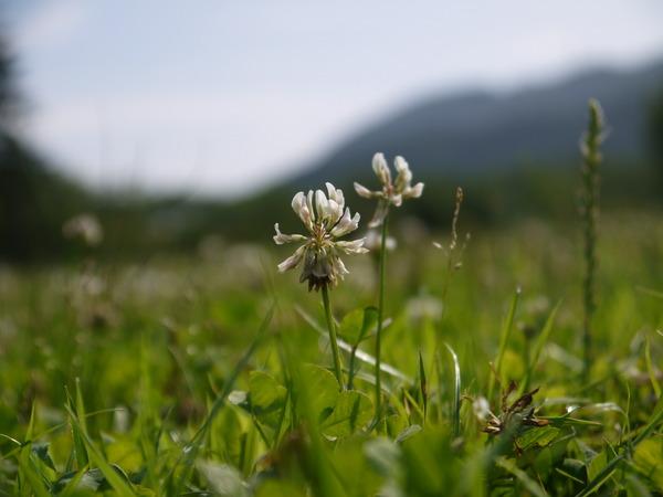 0826_白い小さな花.JPG