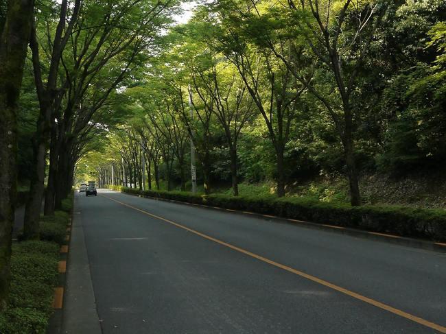 0827_美山通りの新緑_2.JPG