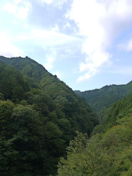 0829_緑が深い裏ヤビツ.JPG