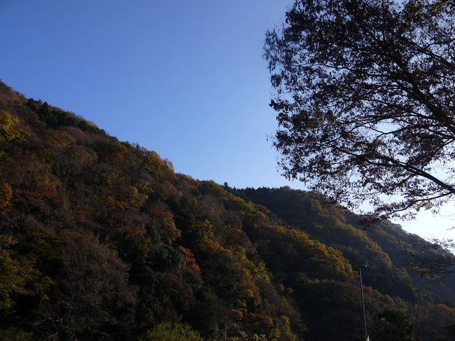0834_半原の紅葉の山.JPG
